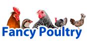 Fancy Poultry